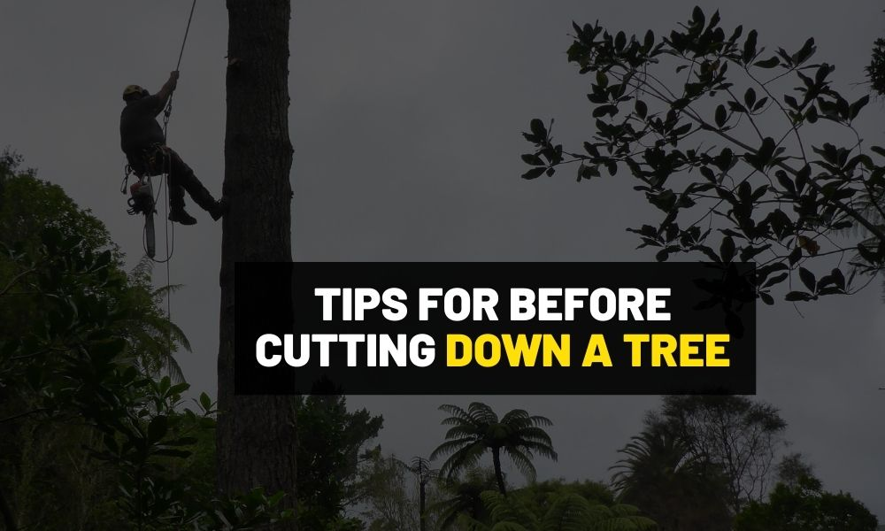 Tips for before cutting down a tree