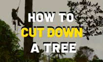 How To Cut Down And Trim Trees [Guide]