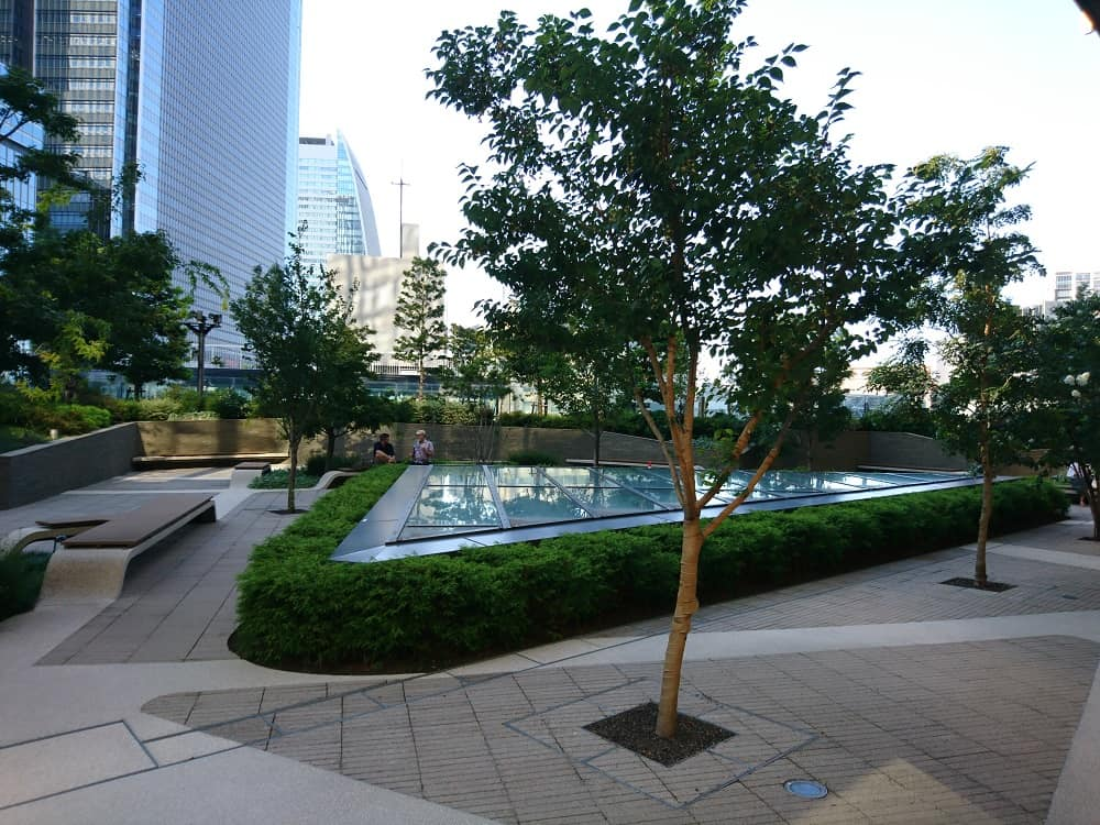 Trees and pond on building roof