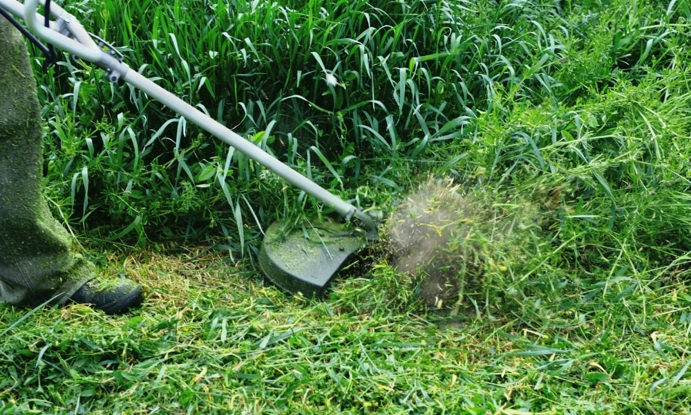 Cutting weeds with weed wacker